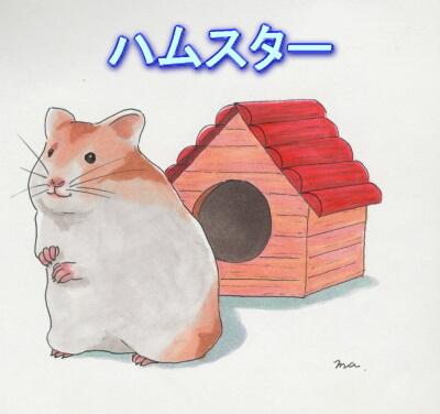 イラスト 松沢 由紀子